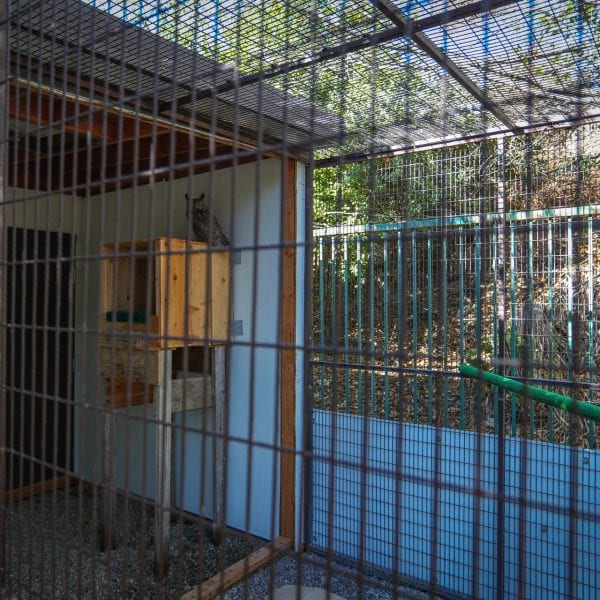 Owl in an aviary
