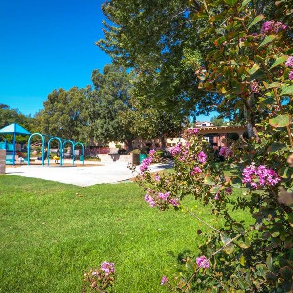 Flowers near the playground