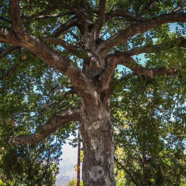 View of a large tree