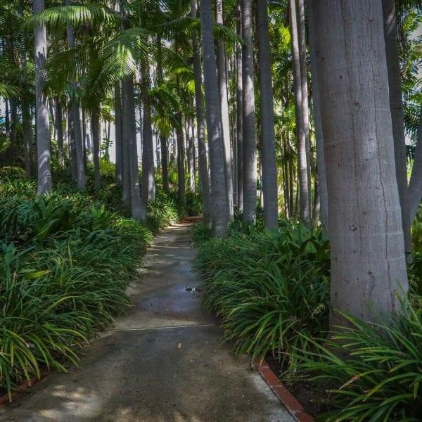 Picture of scenic area at Virginia Robinson Gardens