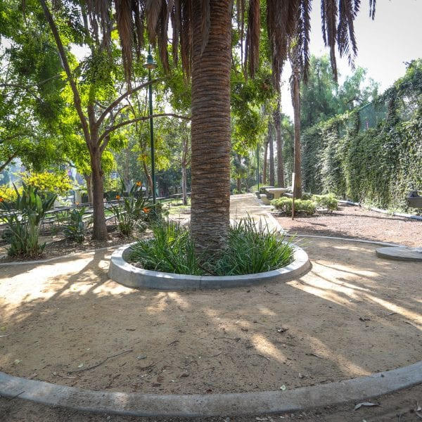 Dirt path through a garden with palm trees