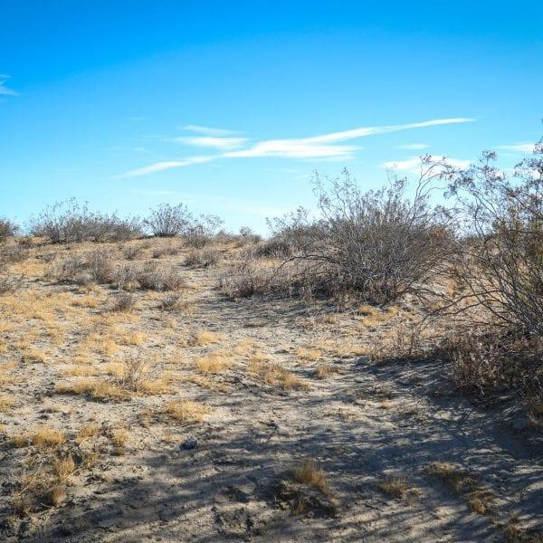 Various shrubs in the desert