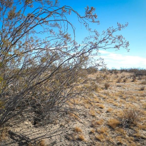 Shrub in the desert