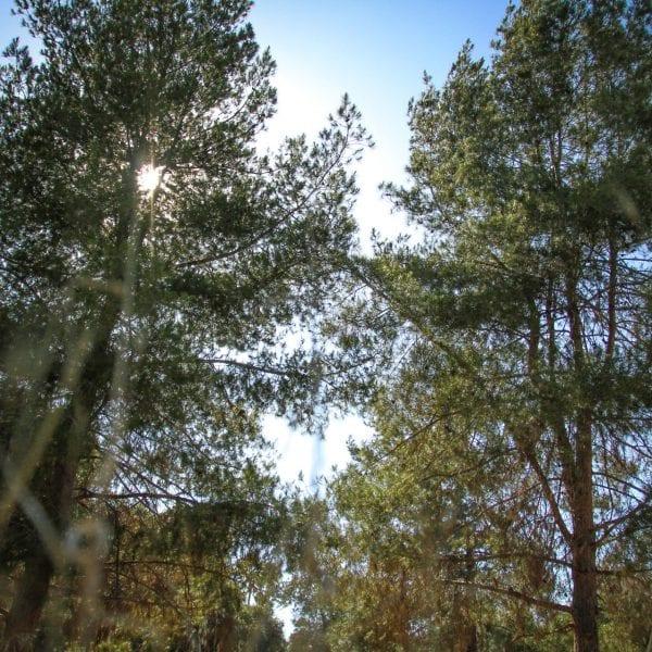 Trees blocking the sun. Blue sky