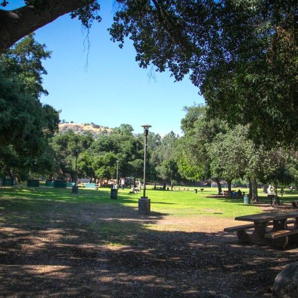 Trees shading a park