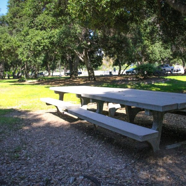 Picnic tables amongst a green lawn surrounded by trees
