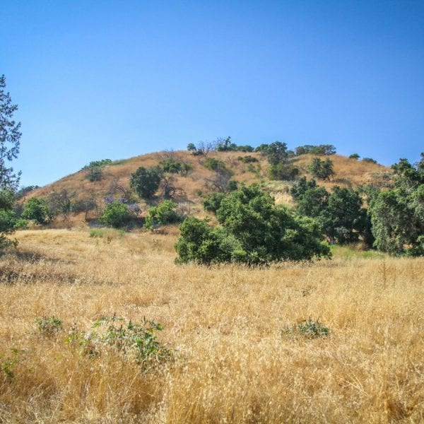 Hills of dry foliage and green trees