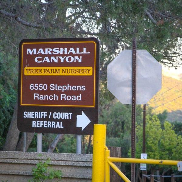 Marshall Canyon Tree Farm Nursery Sign