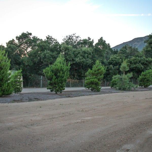 Garden of trees across a dirt lot
