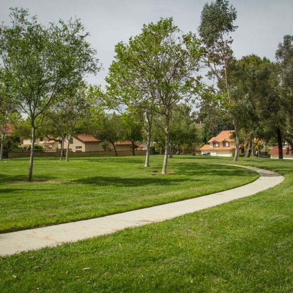 Paved path through lawn with trees