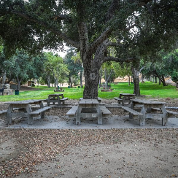Picnic tables and trees in a valley-like grass field