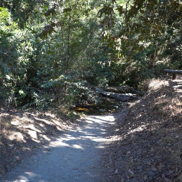Path running through the trees