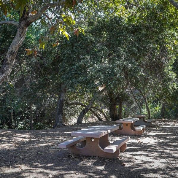 Picnic tables among trees