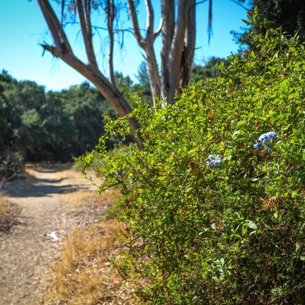 Plant near the dirt path