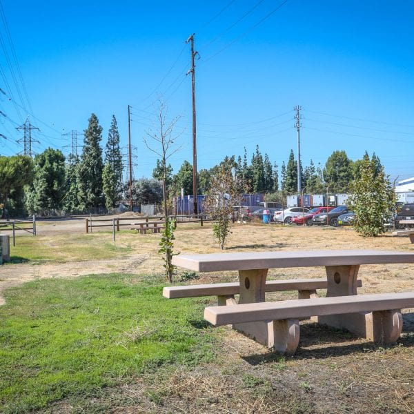 Picnic tables and newly planted trees