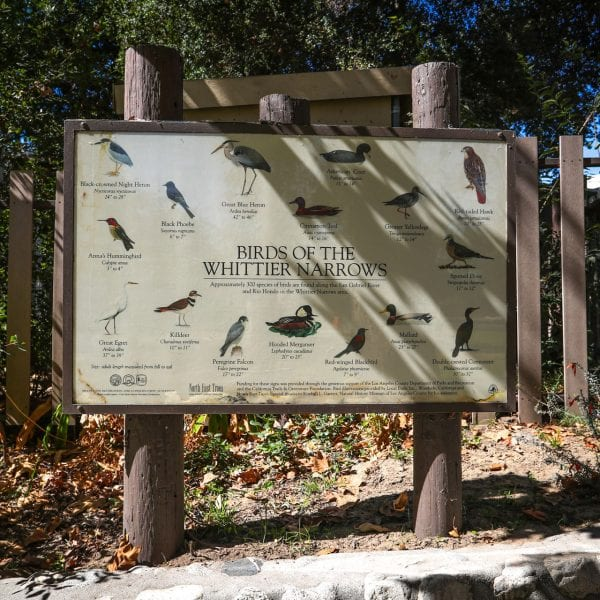 Birds of the Whittier Narrows informational sign