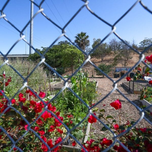 Community garden, viewed through a wired fence