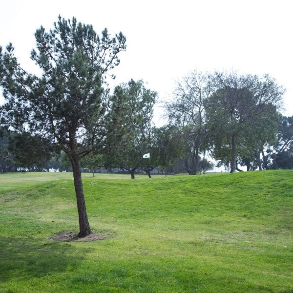 Maggie Hathaway Golf Course trees