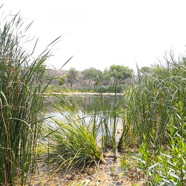Greenery surrounding a pond