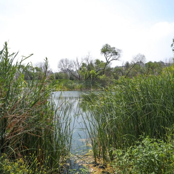 Pond with tall grass and other greenery