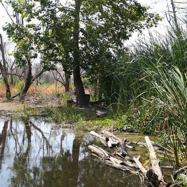 A pond with trees and tall grass