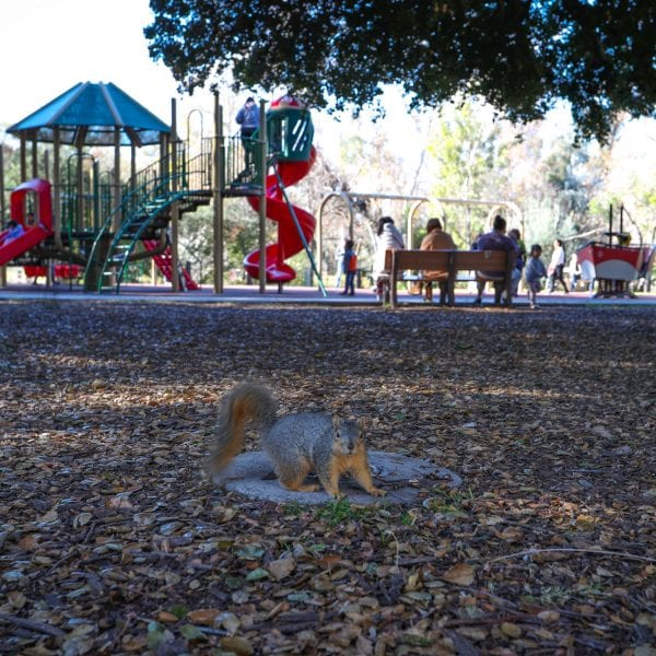 Squirrel in foreground, people at a playground in background