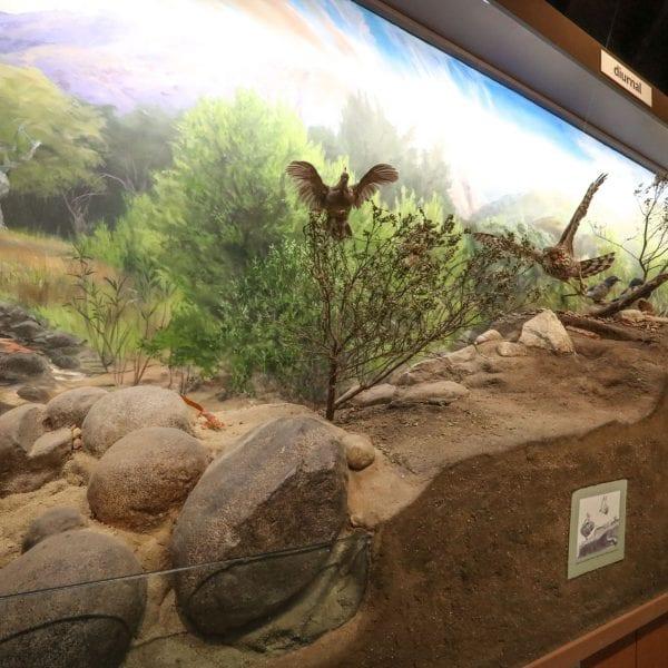 Exhibit of types of birds in a museum