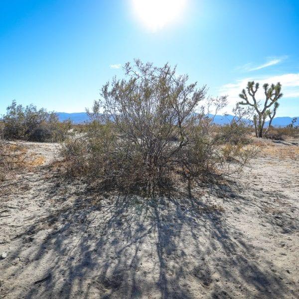 Shrubs in a desert
