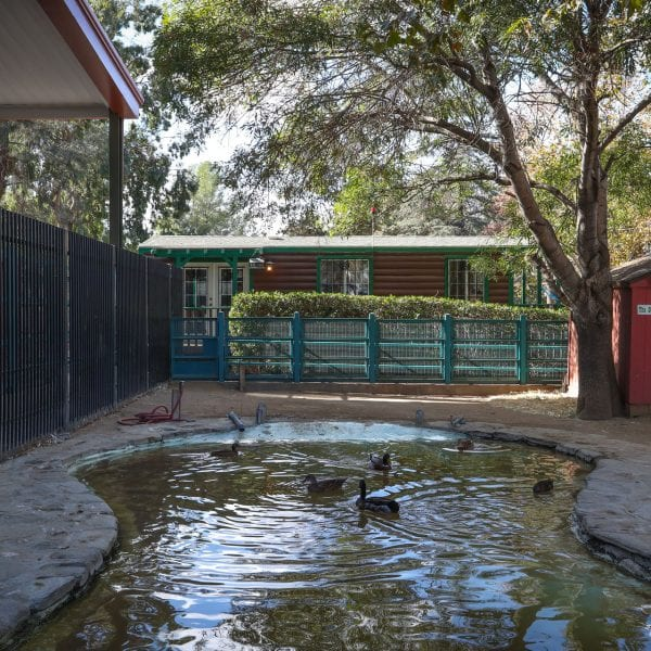Small duck pond surrounded by a fence and facilities
