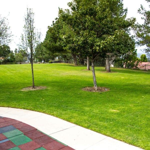 Grass lawn next to a path