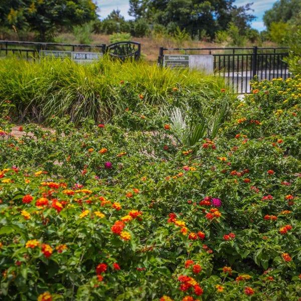 Orange flowers in an area of the garden