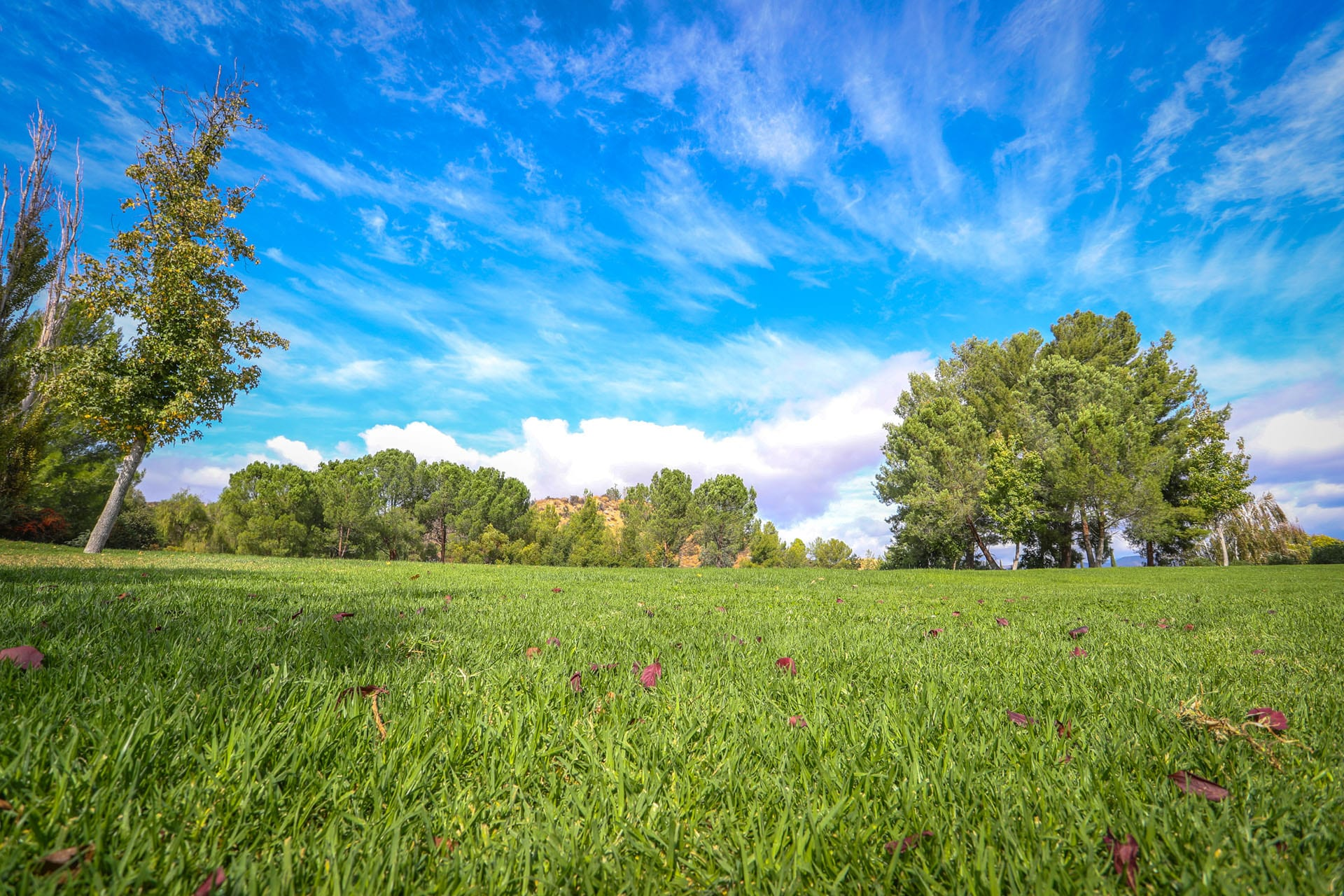 Bright green lawn, tree and sky