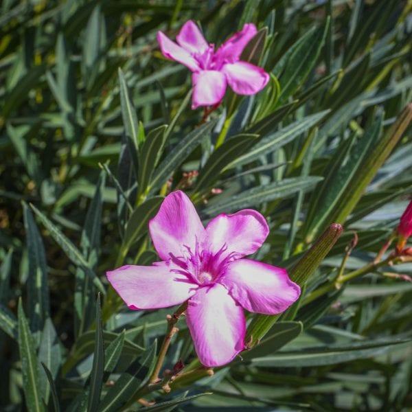 Violet flower in a plant