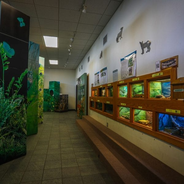Exhibits of various small animals