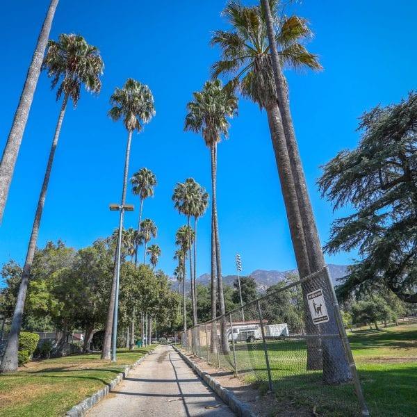 Path among palm trees