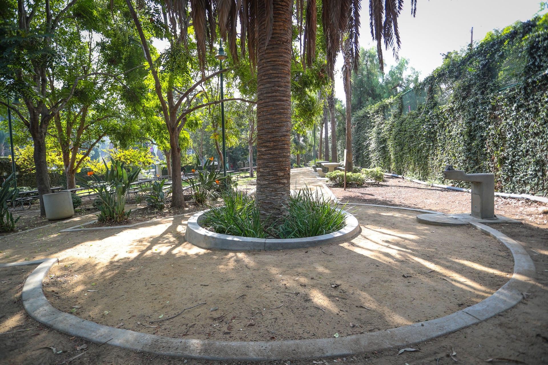 Dirt path through a garden with palm trees