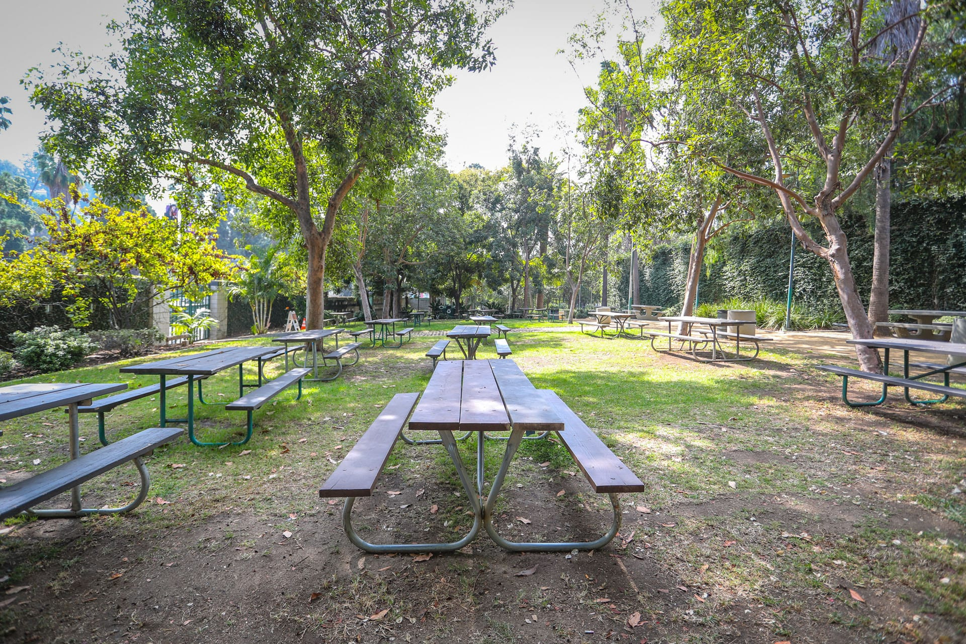 Picnic tables and trees