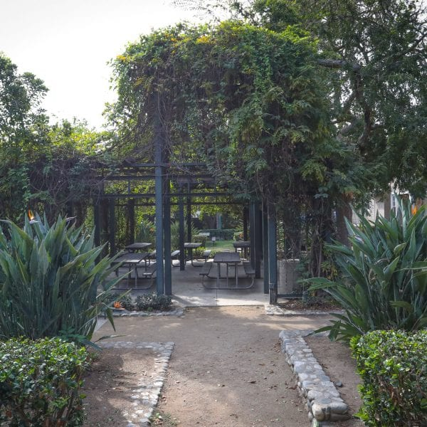 Picnic tables under a vine trellis awning