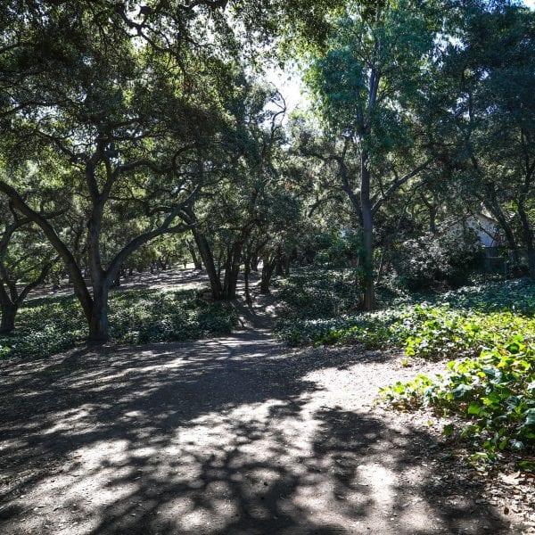 Trees shading a path