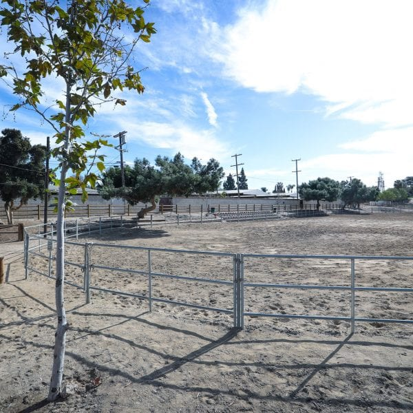 Tree next to equestrian course