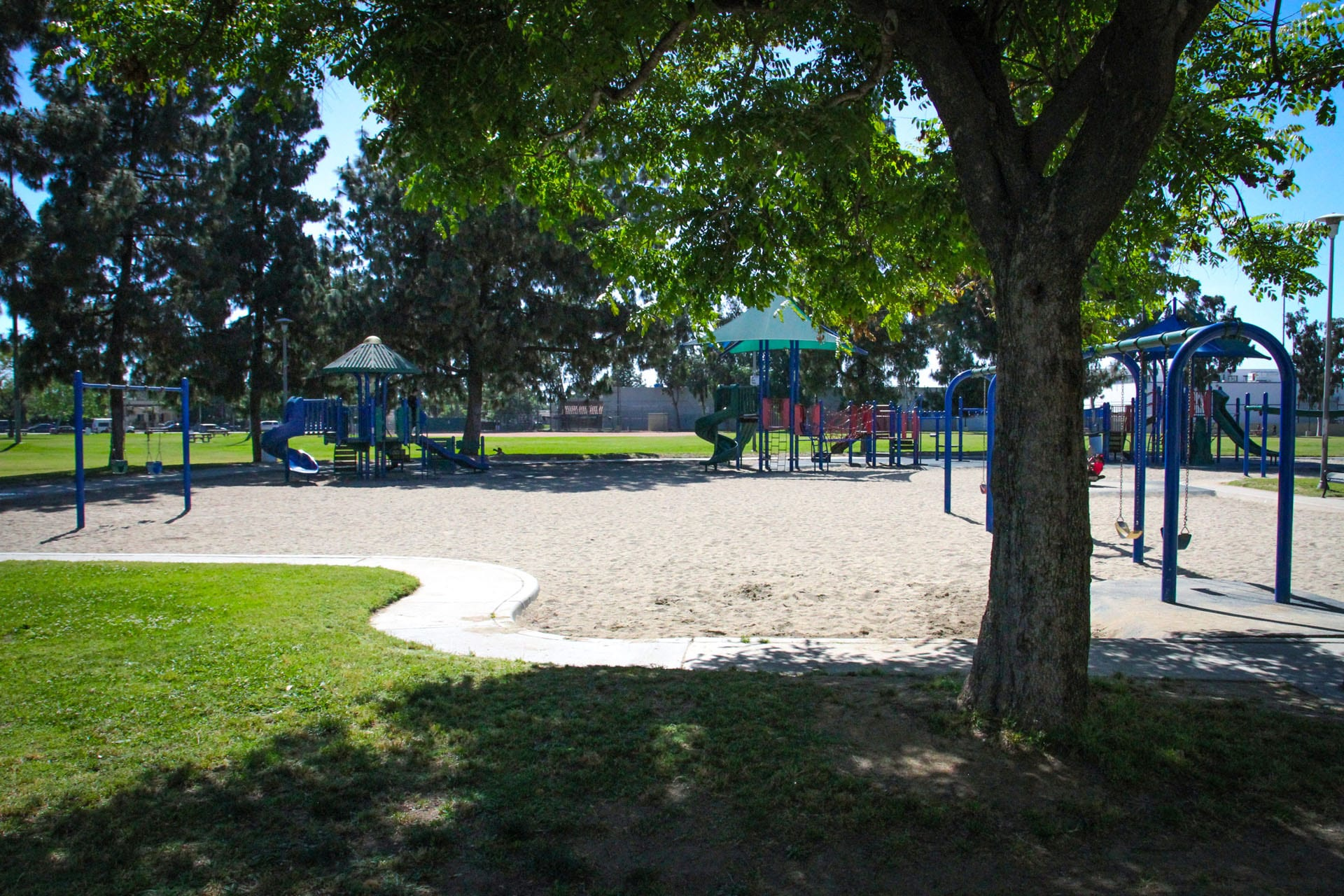 A tree next to the playground and swings
