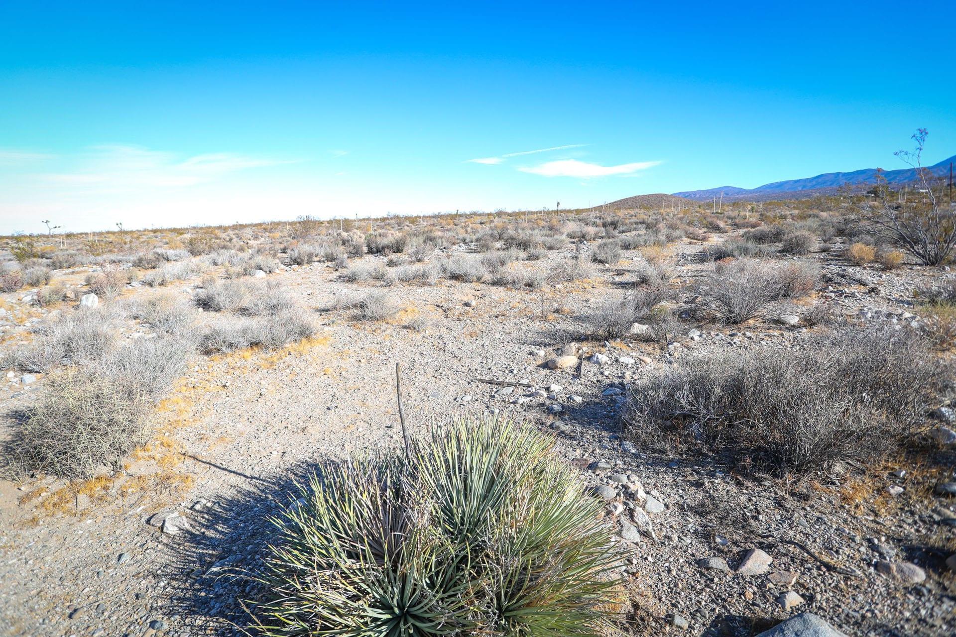 Sage brush in the vast desert area