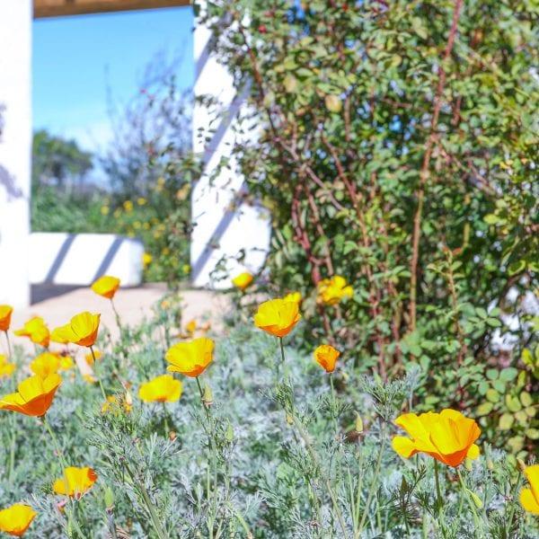 Flowers in a garden area