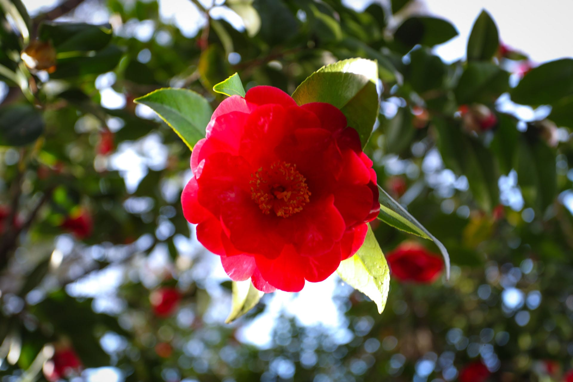 Red flower on a tree