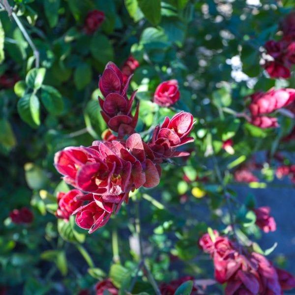Magenta flowers in the sun