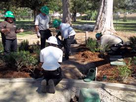 people planting in park