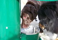 two black dogs drinking out of doggy water fountains