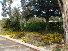 flowers and trees with curb