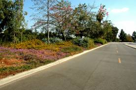 road with flowers and trees on one side