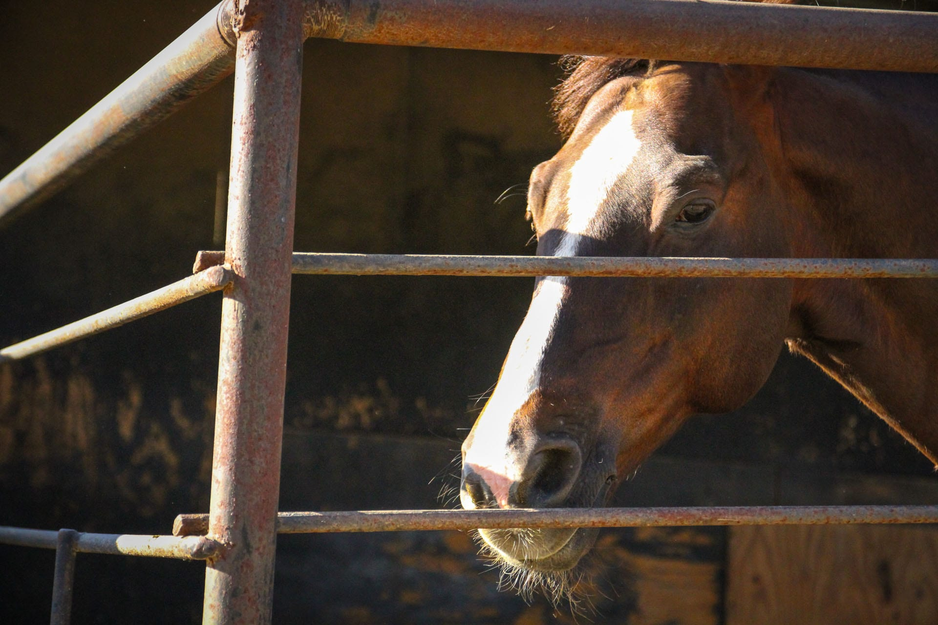 Face of a horse in a stall